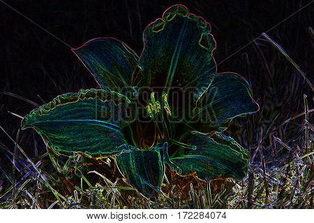 Mysterious gleaming neon colorful bloom wild lily abstract image
