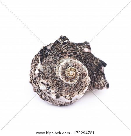 Decorational sea shell isolated over the white background