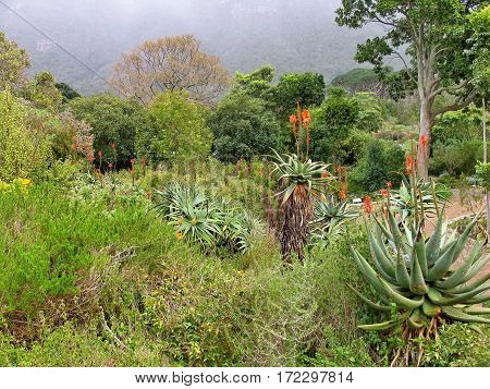 Kirstenbosch Botanical Gardens, Cape Town South Africa 04muoi