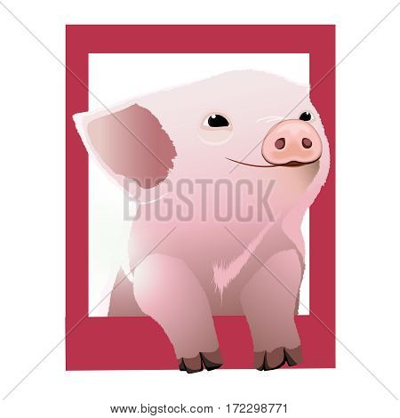 Cute pig looks out from the dark pink frame. Happy pig face. Pig isolated on white background. Cartoon character. Vector illustration