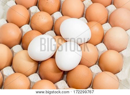 Brown and speckled chicken eggs in the cardboard egg tray and three white eggs from above closeup