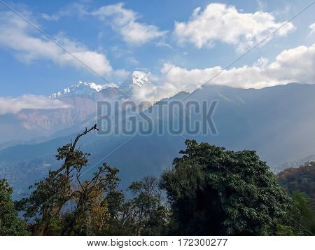 Mountain range with peaks covered with glaciers against the backdrop of the sky with clouds with trees in the foreground in the morning in the Himalayas