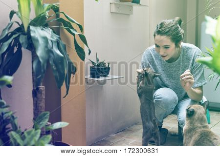 Woman Playing With Cat Holiday