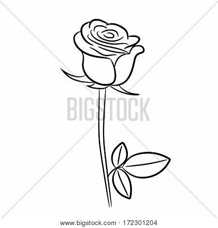 Rose black contour image of vector illustrations