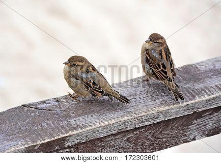 Sparrow On Board