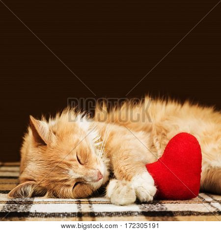 Red fluffy cat asleep hugging soft plush heart toy with copy space