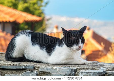 Domestic cat sleeping on a stone wall. Palaios (old) Panteleimonas. Pieria Greece
