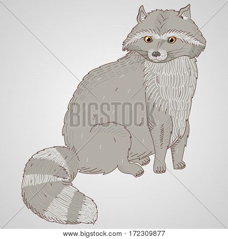 vector illustration coon with hatching in a full-length, hand-drawn