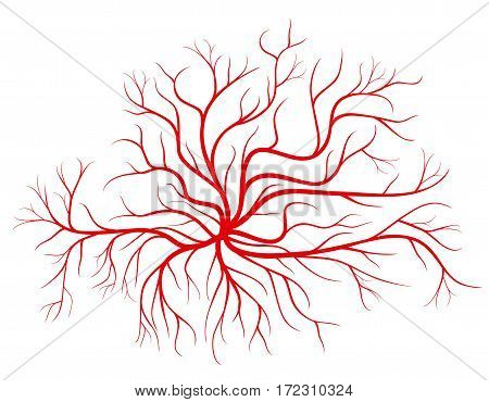 Human blood veins, red vessels vector illustration. Blood vessel and human cardiovascular red silhouette vessel