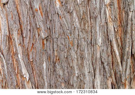 One old tree cracked bark close background