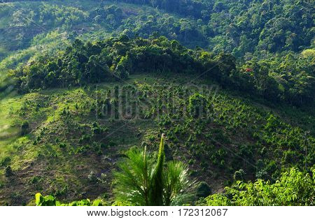 Reforestation on hill at Bao Loc mountain pass Vietnam pine tree planted to cover bare hill forest protection make environment go to better