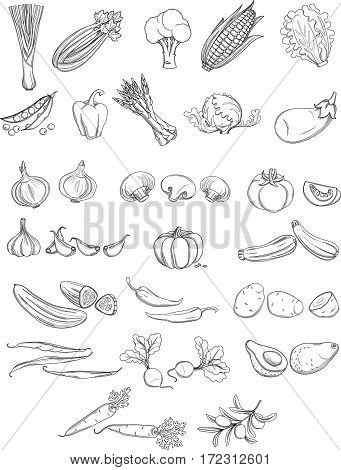 Set of organic farm fresh fruits and vegetables: tomato, potato, onion, greens, pumpkin, mushruums, olives. Vector illustration. Outline line flat style design. White backdrop.