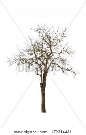 A Dead tree isolated on white background
