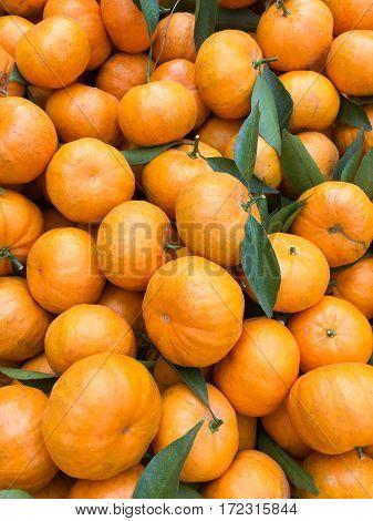 Chinese Small Cumquat Oranges