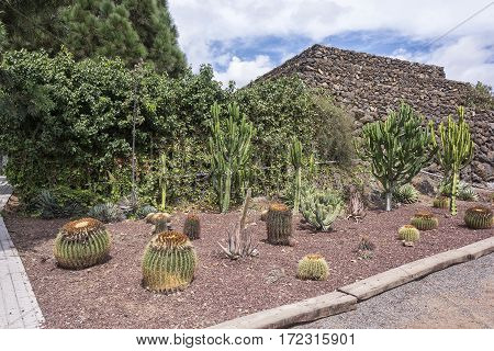 On stony ground grow cactuses of different species