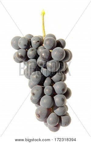 grapes blue isolated on a white background