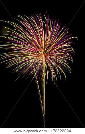 A purple and gold fireworks shot off in the night sky