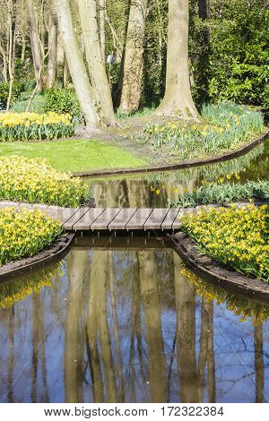 Spring in flowering green garden Keukenhof with yellow daffodils and small decorative pond Netherlands