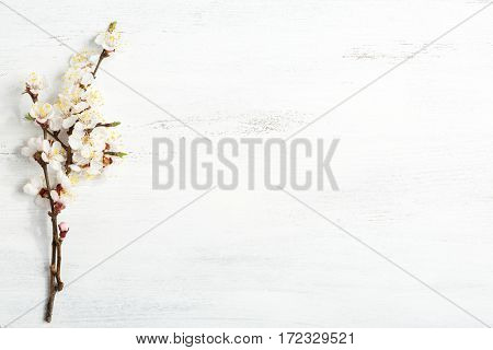 Old wooden shabby background with branches of blossoming apricot