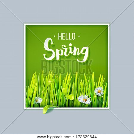 Hello Spring lettering with green grass and chamomile on green background in frame. Spring background. Design for banners, greeting cards, spring sales. Vector illustration