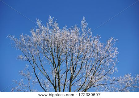 background, beautiful, birch, blue, bough, branch, climate, cold, color, cool, covered, december, february, forest, freeze, frost, frosted, frosting, frosty, hoarfrost, ice, icicle, icy, january, landscape, light, limb, natural, nature, outdoor, scene, sc