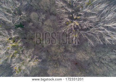 Deciduous Forest From Drone
