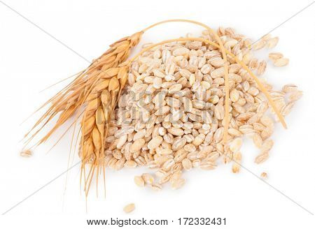 Pearl barley with spikelets