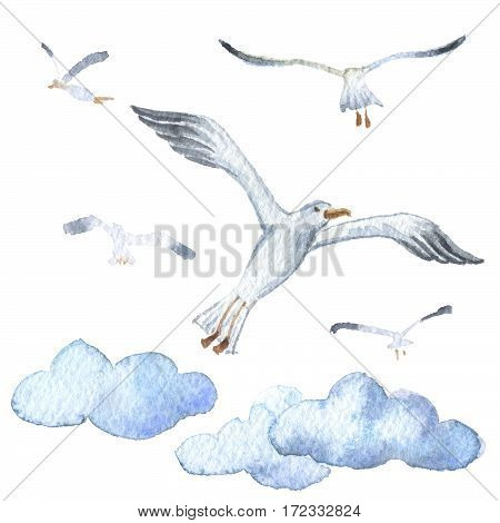 Watercolor. Seagull in the blue clouds. Marine icon. Hand-drawn illustration. Isolated on white background.
