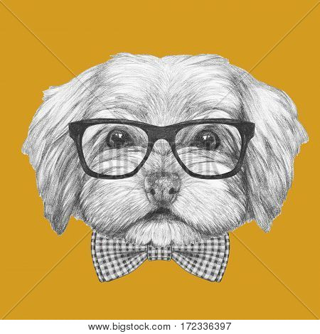 Portrait of Havanese with glasses and bow tie. Hand drawn illustration of dog.