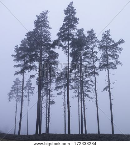 some old tree in the fog on the hill