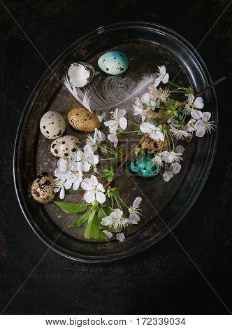 Colorful Easter Quail Eggs