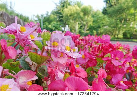 Colorful Color Flowers With Pink, Red Alternately Striking