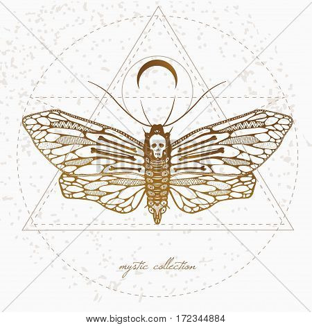 vintage style illustration with dead's head butterfly, mystic illustration with beautiful sullen moth