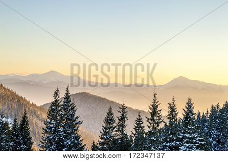 Beautiful winter panorama. Landscape with spruce pine trees blue sky with sun light and high Carpathian mountains on background.