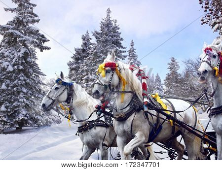 Russian national team of horses - Troika