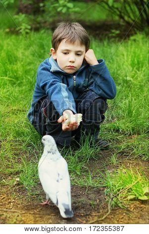 Preteen Little Boy Feeding White Pigeon