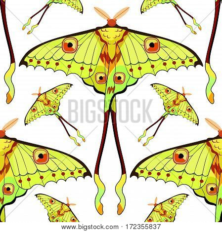 Seamless Pattern Butterfly Madagascar Comet Moth Moon  Vector Illustration