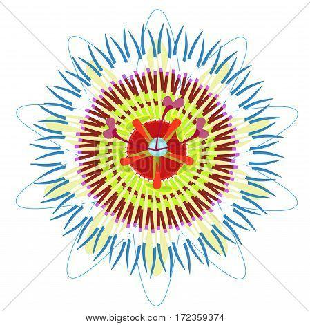Passion Flower Blue Tropical Fruit. Vector Illustration