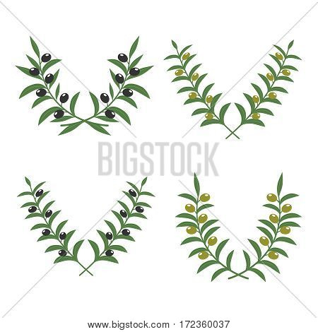 Olive branch wreaths vector isolated on white background. Illustration of crossed olive branches