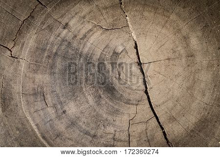 Cross section of the old tree. Wood annual rings. Old wood texture.