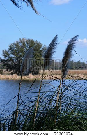 vertical shot of marsh grass blades and tree across water