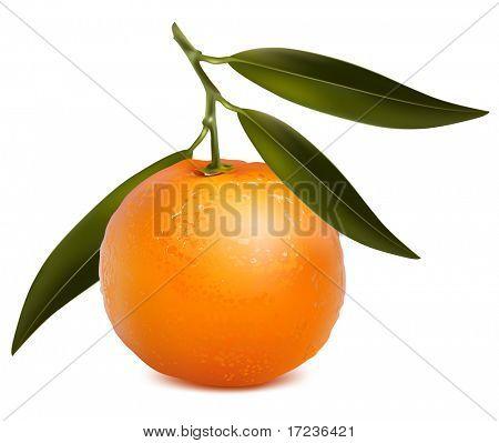 Vector fotorrealistas. Mandarina con hojas.