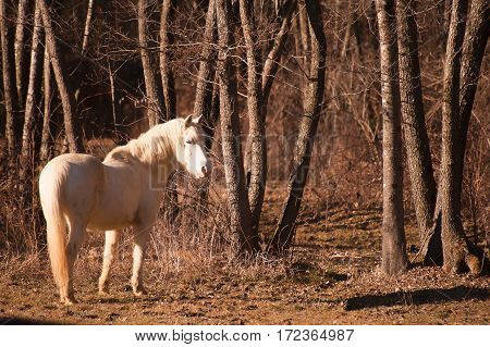 Free white horse that enters the Woods