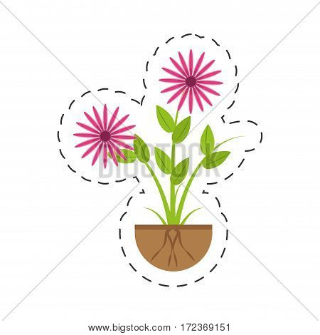 aster flowers bunch flora growing vector illustration eps 10