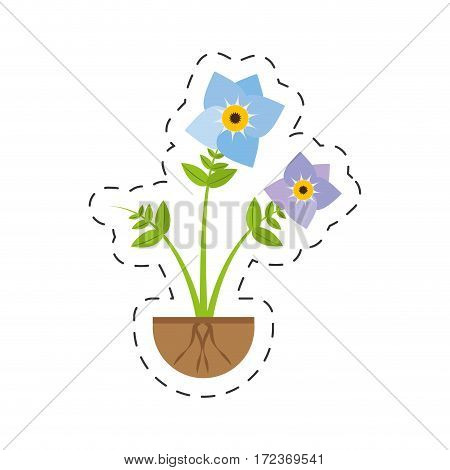 pansy flower spring growing vector illustration eps 10