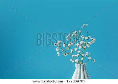 Closeup Baby's breath - gypsophilia paniculata - in vase on blue background.