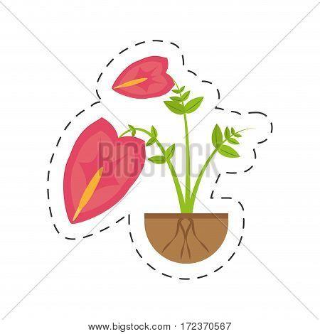 anthurium leaf plant exotic growing vector illustration eps 10
