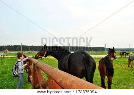 The sympathetic young man treats a horse with dandelions.