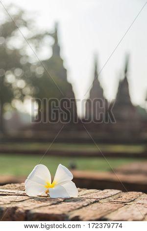 Flowers Ruins in Ayutthaya Thailand,Temple in ayutthaya