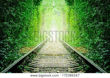 a railway in the spring forest